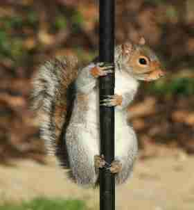 Golf Partnership Offer squirrel